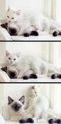 29th Jul 2014 - Kitty Love