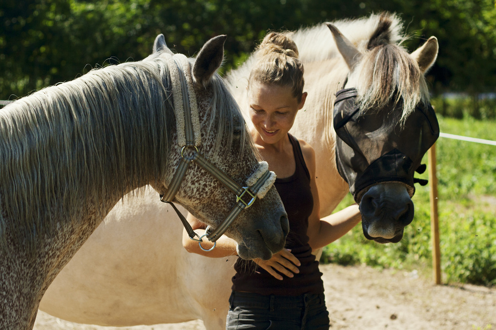 I love my horses :) by lily