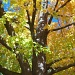 HIDDEN BLUE SKY by bruni