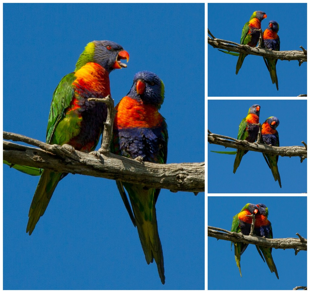 Together by gosia