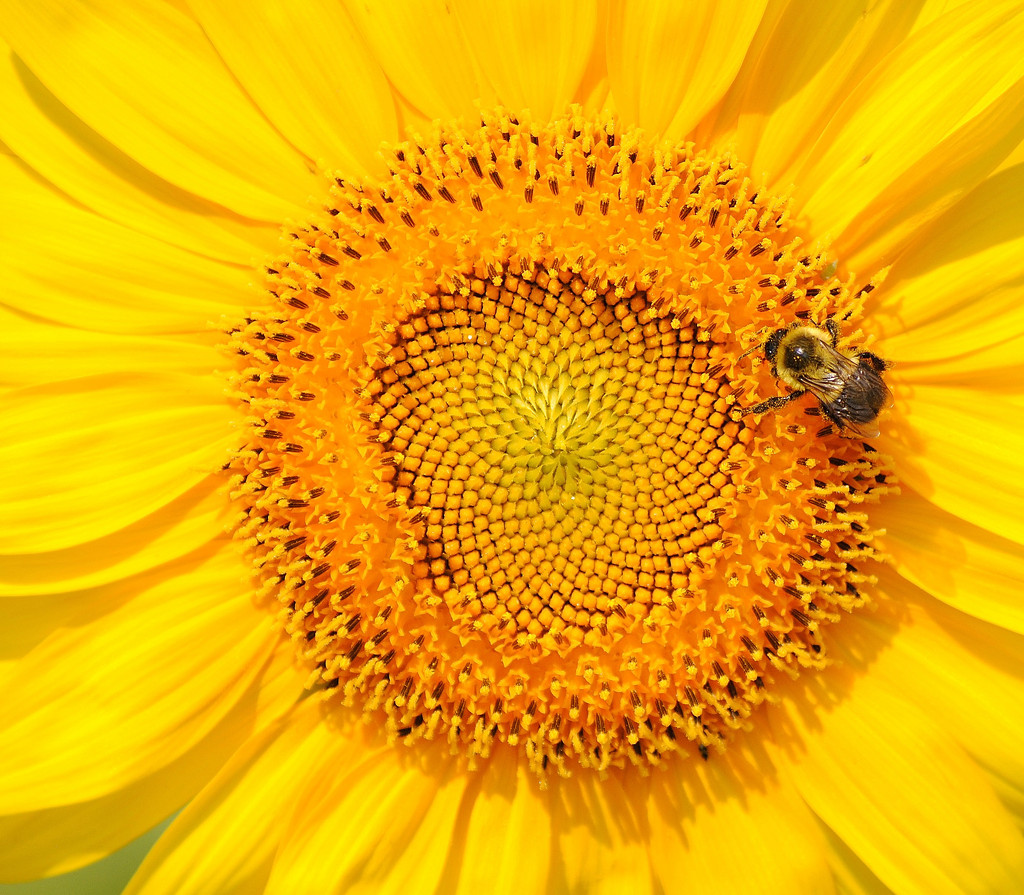 Don't Worry, Bee Happy!! by alophoto