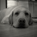 Dog on the Floor by epcello