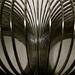 Slinky by rosiekerr