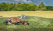 2nd Aug 2014 - Forty winks...