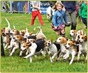 3rd Aug 2014 - Running With The Hounds!
