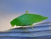15th Oct 2010 - Insect