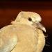 Homeless Baby Bird [sooc] by gailmmeek