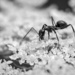 Another Ant
