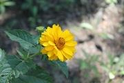 10th Jul 2014 - Yellow Flowers Everywhere