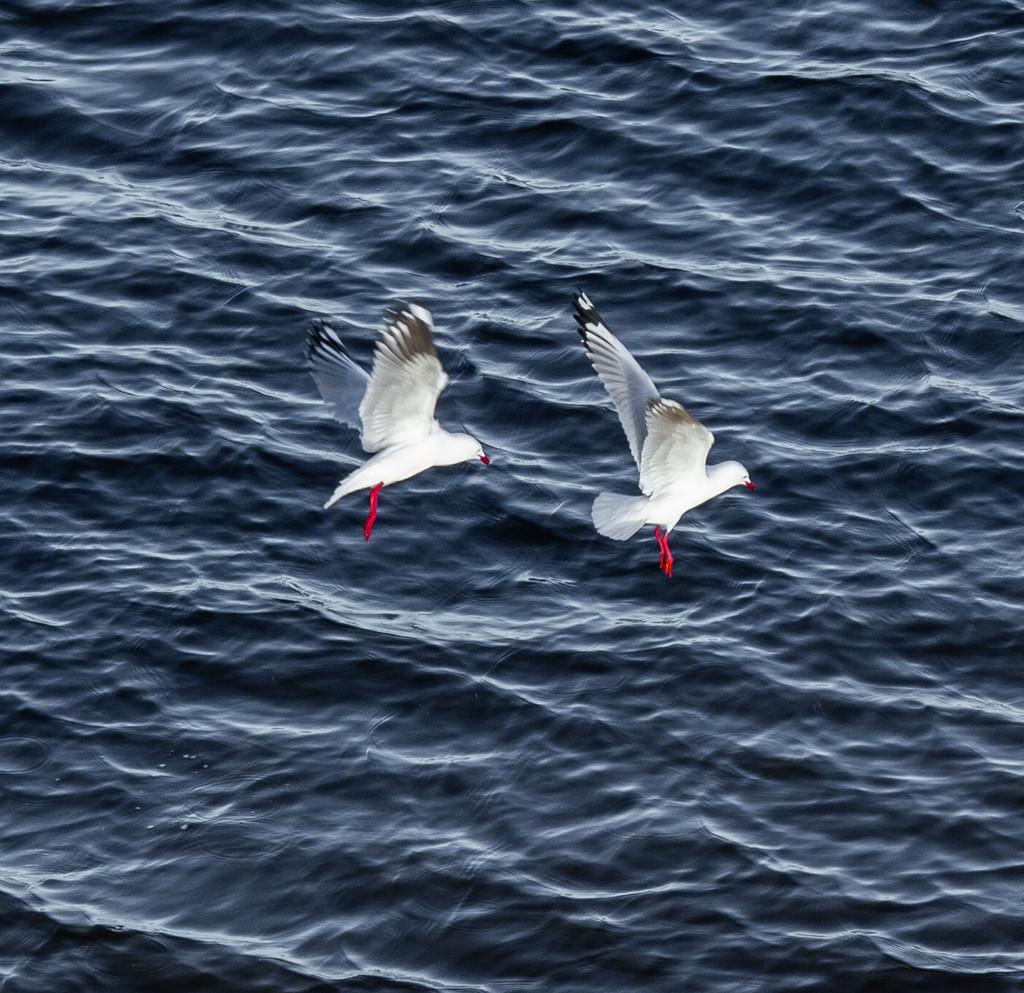 Duo landing by gosia