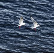 3rd Aug 2014 - Duo landing