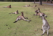 4th Aug 2014 - Disinterested Spectators at Golf