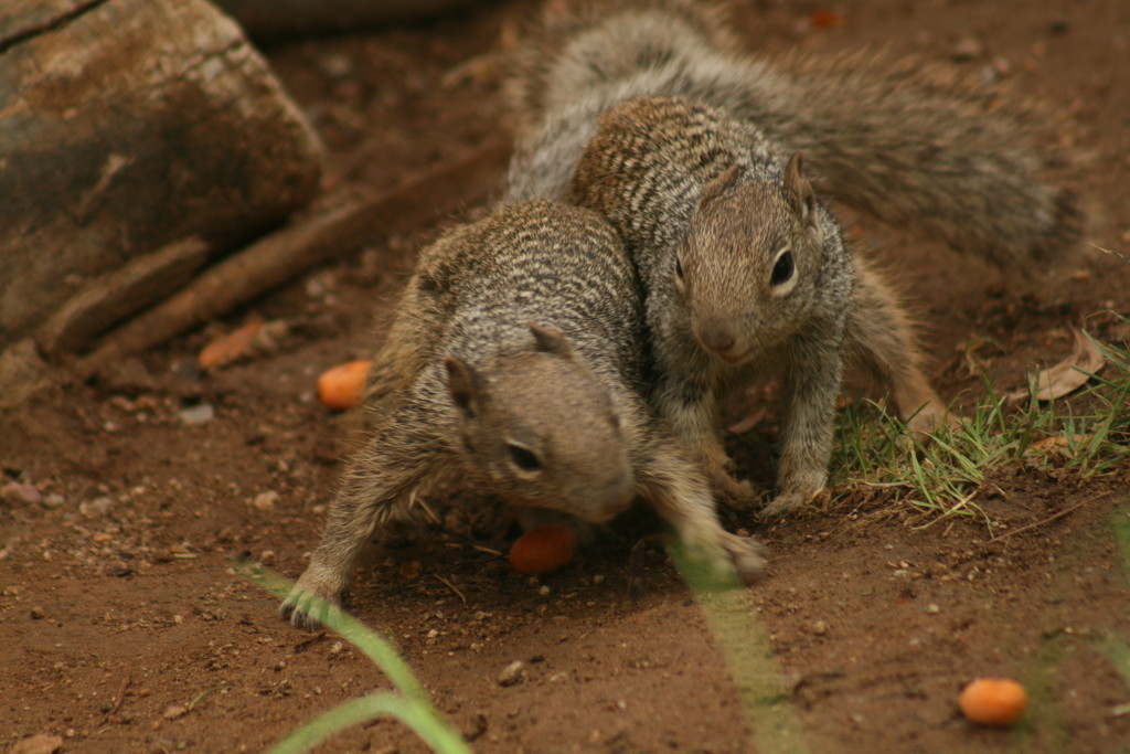Attack Squirrels by kerristephens