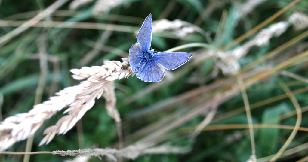 Blue by callymazoo