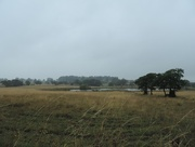 5th Aug 2014 - Rainy afternoon
