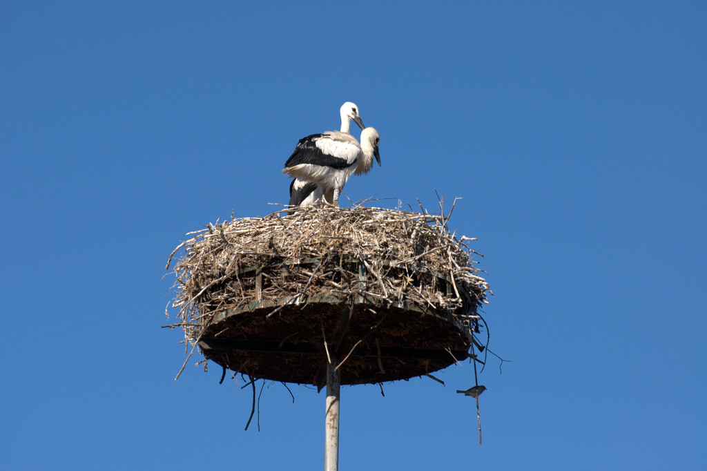 Stork pair and small bird by overalvandaan