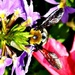 Pollinating Time by moviegal1