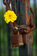 5th Aug 2014 - Locked and Rusty