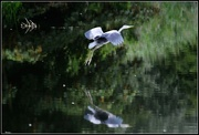 8th Aug 2014 - Taking off