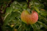 8th Aug 2014 - Be Fruitful
