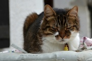 8th Aug 2014 - Cat day