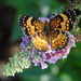 What's a butterfly garden without butterflies? by genealogygenie