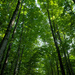 Not Arashiyama Bamboo Grove by jyokota