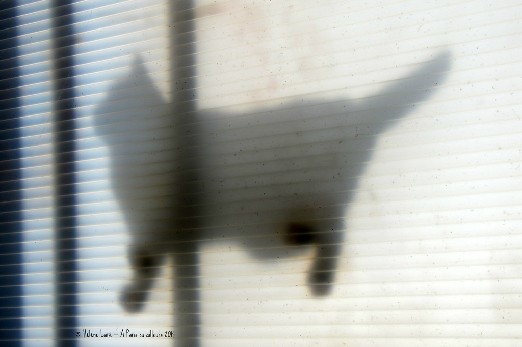 The cat on the veranda's roof  by parisouailleurs