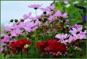 11th Aug 2014 - Flowers on the Embankment