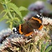 Red Admiral Butterfly by snoopybooboo