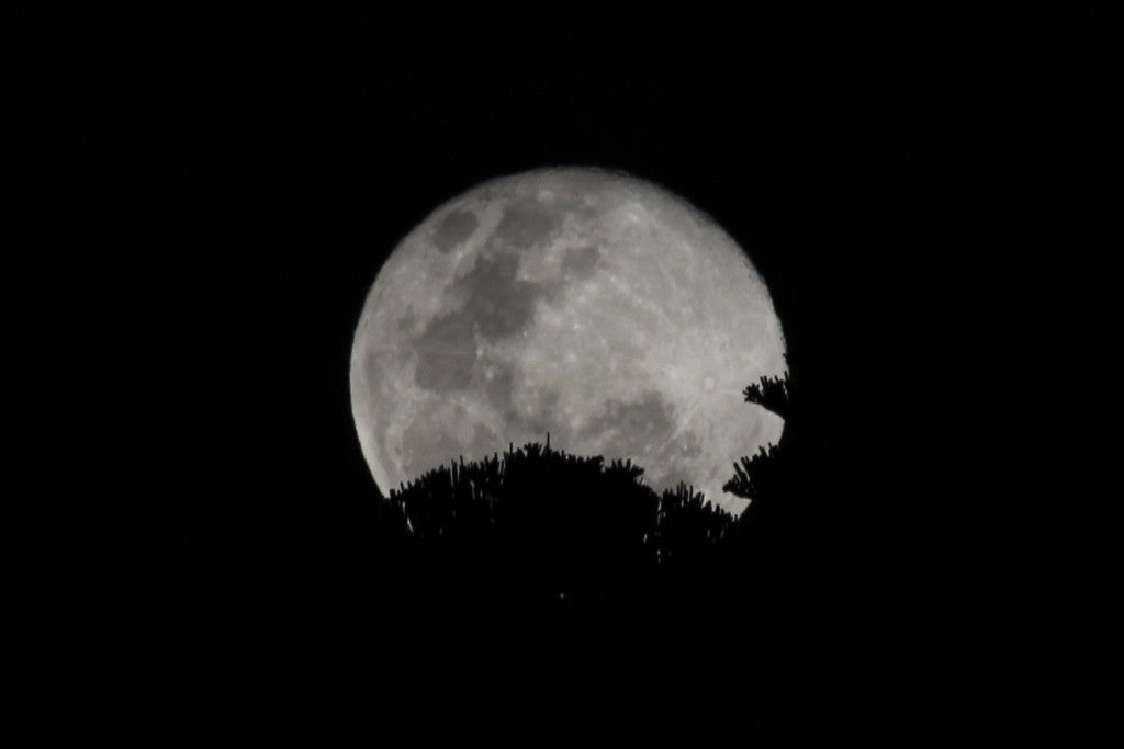 Maybe a day late, but still a full moon! by gilbertwood