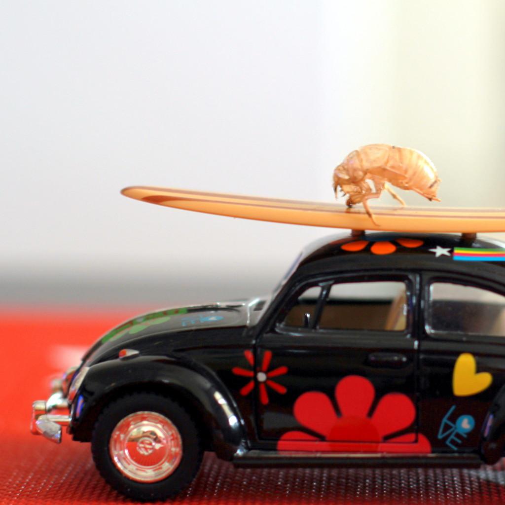 Lady bugs~ by joemuli