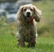 13th Aug 2014 - happy holiday dog.