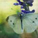 Summer Treasure by lyndemc