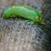The Very Hungry Caterpillar  by jyokota