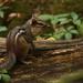 Native Wildlife by mzzhope