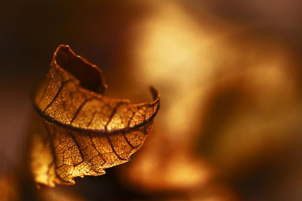 Golden Light by mzzhope