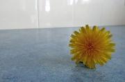 18th Oct 2010 - Flower