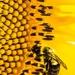Pollenator by darylo