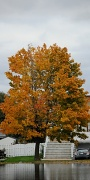 16th Oct 2010 - Fall tree