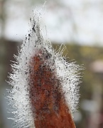 9th Oct 2010 - 365-Hairy carrot IMG_1234