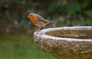20th Aug 2014 - robin