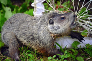 20th Aug 2014 - Our Groundhog Day