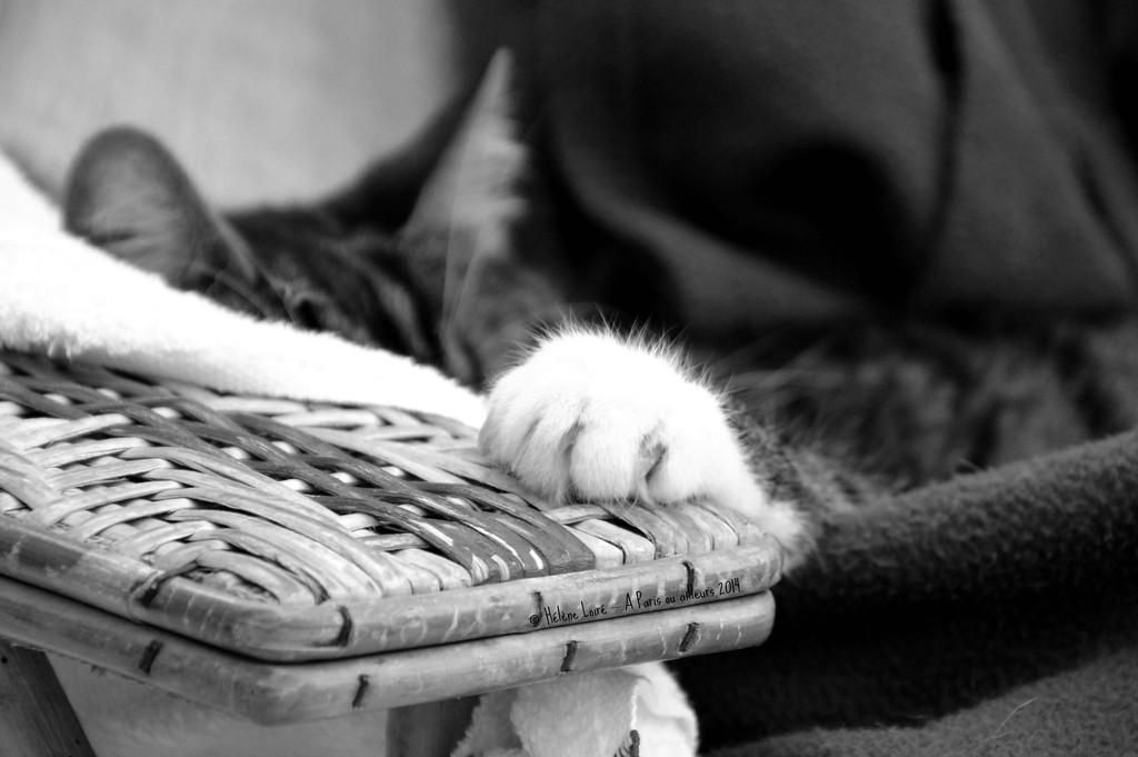 cute nap #2 by parisouailleurs
