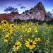 Sunflower Bliss