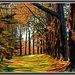 Avenue of Tree's by julzmaioro