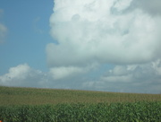 22nd Aug 2014 - Corn as far as you can see