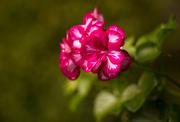 22nd Aug 2014 - flower #114