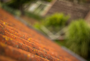 23rd Aug 2014 - roof view #115