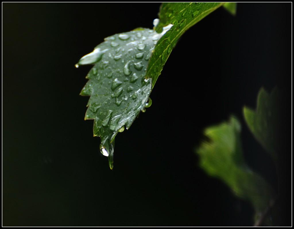 Dripping wet by rosiekind